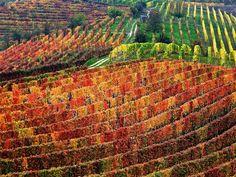 Walking through the vineyards - part two  by Giovanni Battagliola - Piemonte, Italy