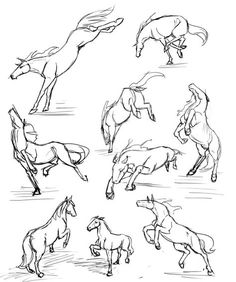 cartoon drawing techniques More horse studies by RasnovStables on deviantART - Horse Drawings, Cartoon Drawings, Animal Drawings, Drawing Poses, Drawing Tips, Drawing Sketches, Horse Anatomy, Animal Anatomy, Horse Sketch
