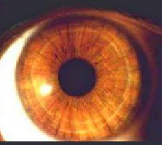 Descubra a sua personalidade e parte do seu objetivo de Vida, sua e de outras pessoas, através do FORMATO da Iris Ocular...   Somos Artes