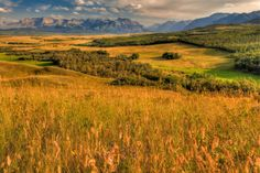 En route to the Montana Border in Alberta, you'll witness spectacular lookouts off the highway. The vast landscape shows of the Prairies is framed by the beautiful backdrop of the Rocky Mountains.