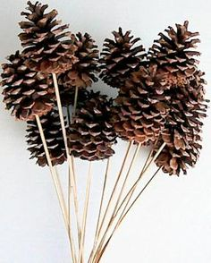 Natural Stemmed Ponderosa Pine Cones Single Box by Curious Country Creations Pine Cone Art, Pine Cone Crafts, Pine Cones, Fall Crafts, Christmas Crafts, Christmas Ornaments, Summer Crafts, Kid Crafts, Craft Projects