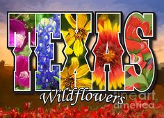 "<a href=""http://fineartamerica.com/art/paintings/flowers/all"" style=""font: 10pt arial; text-decoration: underline;"">flowers paintings for sale</a>"