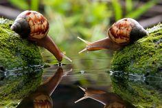 thelindsifer:  Snails!