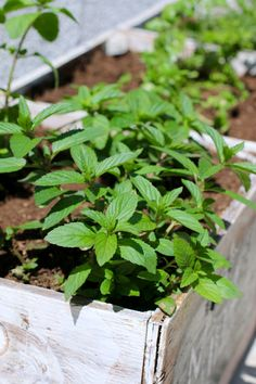 How to Start an Herb Garden  (for Dummies)   To Live & Diet in LA