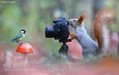 by vadimtrunov #animals #animal #pet #pets #animales #animallovers #photooftheday #amazing #picoftheday