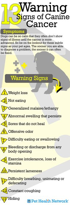 13 Warning Signs of Canine Cancer! A must read if you're a dog owner, you can never be too safe!