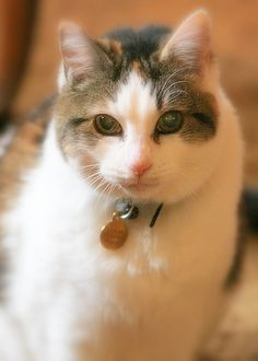 Callie was a farm cat at my folks place when The Herbfarm was in Fall City. She moved to Woodinville and lived to the fine old age of 17. A sweet girl, she was.