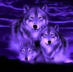 Cute Galaxy Wallpaper, Wolf Wallpaper, Nature Wallpaper, Iphone Wallpaper, Wolf Images, Wolf Pictures, Wolf Photos, Wolf Craft, Wolves And Women