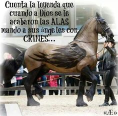La consentida de Dios #AE #HorseLove #Caballo #Horse #Angel #PureLove #Wings <3