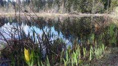 Beaver Lake Aquarell in 🇨🇦, April 2018 Vancouver, Watercolor