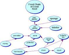 coral reef food web   Food Chain: