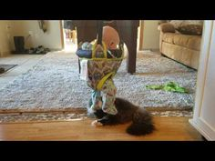 Cat loves its new toy: A baby in a bouncy swing | MNN - Mother Nature Network