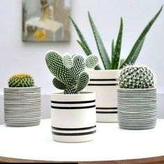 Room decoration using cactus is never ending. Starting from the real cactus, cactus displays, to the cactus made of stone. Methods, planting media, and pots used to plant cactus and important infor… Cactus Flower, Flower Pots, Cactus Cactus, Small Cactus, Cactus Decor, Decoration Plante, Pot Plante, Plants Are Friends, Deco Floral