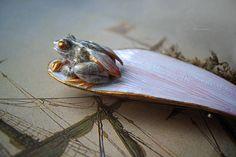 Frog Brooch Toad Brooch Prince Brooch enchanted Prince