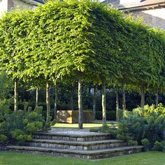 Pleached Hornbeams Pleached hornbeams line a rectangular courtyard. Design by landscape architect, Jane Brown.