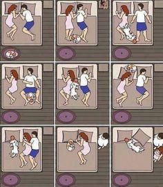 Dormir com cães