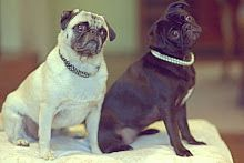 My pugs, Coco & Emma  photo by Stefan Studer photography