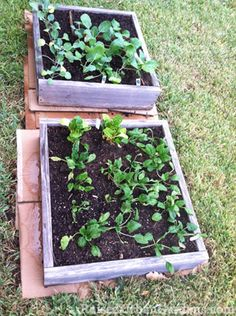 the story of the start of my garden...just the beginning