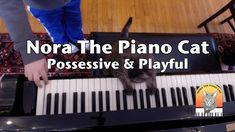 Nora The Piano Cat: Possessive & Playful<---I'm a big fan of Nora's work!--Kaeli :-)