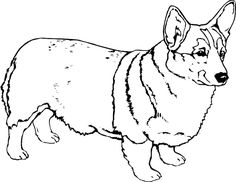 corgi coloring pages 22 Best Corgi coloring pages images | Coloring pages, Adult  corgi coloring pages