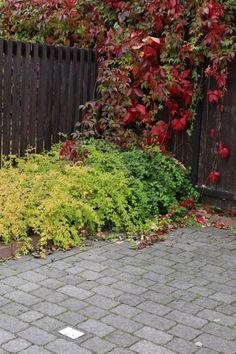Verona-kivet www.rudus.fi/pihakivet