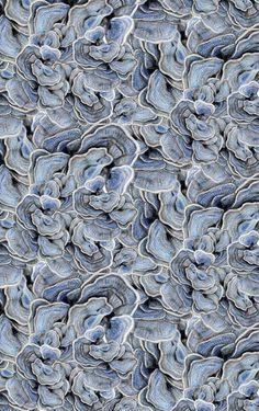 claire fischer | motif champignons d'arbre, 2013