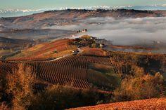 Langhe, Roero e Monferrato... patrimonio mondiale dell'umanità (slow wine)