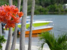 Le lagon -  Photos de vacances de Antilles Location #SaintMartin