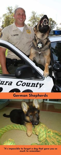 Read more about German Shepherds Check the webpage to find out more... #germanshepherd