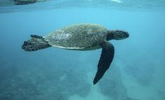 Click to see this green sea turtle and more great animal photos! (Hugh Gentry / Reuters)