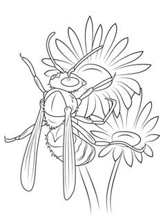 Zebra Longwing Butterfly Coloring Page
