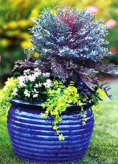 Cobalt Blue Glazed Pot That Is Complimented By The Plant Materials Used Smashing