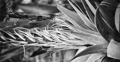Black & White Film Photography Study