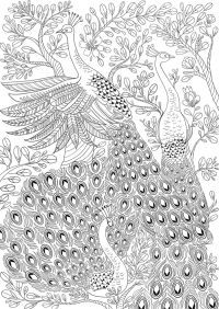 ru / Picture # 6 – ANTISTRESS – The Effective Pictures We Offer You About quote Coloring Pages A quality picture can. Peacock Coloring Pages, Detailed Coloring Pages, Free Adult Coloring Pages, Coloring Pages To Print, Coloring Book Pages, Printable Coloring Pages, Peacock Quilt, Peacock Painting, Bird Illustration