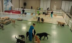 More daycare areas – Ursula Morell – pet resort Indoor Dog Park, Indoor Pets, Indoor Outdoor, Dog Kennel Designs, Diy Dog Kennel, Dog Kennels, Dog Boarding Kennels, Pet Boarding, Puppy Playground