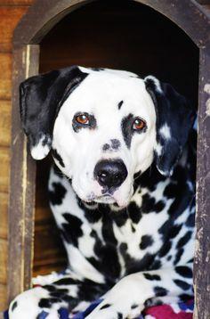 i still miss my Satch. he was a good boy!