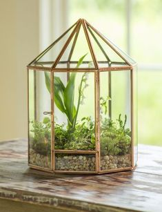 Create a unique-to-you terrarium using your own glass container. DIY terrarium kit includes moss, soil, rocks and more. Terrarium Diy, Small Terrarium, Glass Terrarium Ideas, Terrarium Centerpiece, Air Plants, Indoor Plants, Indoor Gardening, Foliage Plants, Cactus Plants