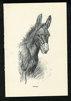 Antique Animals Art Print 1930s Donkey b/w from the book Dowsha The Story Of A Donkey