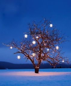 Moravian stars on a sparkly tree light up the night.