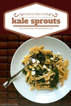 """Grow, harvest and cook kale sprouts - a delicious """"bonus"""" crop from an easy-to-grow veg."""