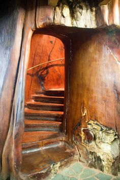 Ancient Kauri Tree Staircase by russellstreet, via Flickr