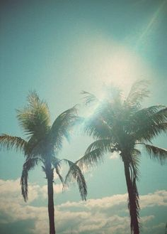 Palm Trees Photography at The Beach in Southern California