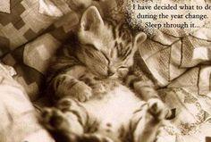 「寝てる動物の赤ちゃんよりも幸せを感じるものなんてあるの?」写真18枚