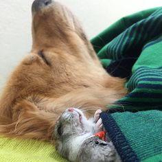 A amizade é uma das coisas que mais nos fascina no mundo animal, mas esta aqui irá superar tudo que você já viu até hoje. + Conheçao aplicativo para achar o par perfeito para o seu pet Bob é um...