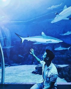 Hong Kong singer-songwriter was chilling at our S. Aquarium, perhaps drawing inspiration for his next song! Sea Aquarium, Ocean Video, Marine Life, Chilling, Hong Kong, Attraction, Vacations, To Go
