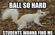 LSU's famous albino squirrell.