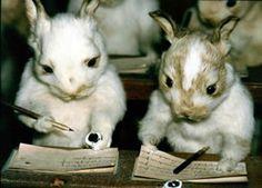 studious bunnies taxidermy