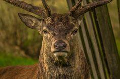 """5 Great Exercises For The Successful Deer Hunting Season"": #Fitness #Deer-Hunting"
