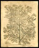 Parsel Persel family tree