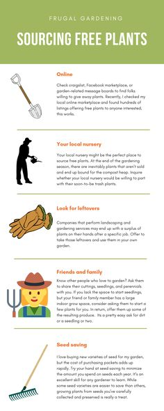 Frugal Gardening - Simple ways to save money while you garden Ways To Save Money, Money Saving Tips, Online Checks, Free Plants, Plants Online, Frugal Living Tips, Free Tips, Simple Way, Gardening Tips